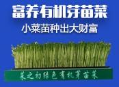 芽苗菜 li体种zhi
