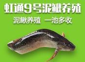 特se水产 泥鳅养殖
