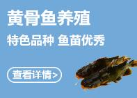 黄gu鱼 好生意