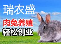 瑞农rou兔