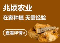 桑黄羊肚菌 jin线lian