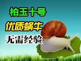 蜗牛养殖 柏玉十号